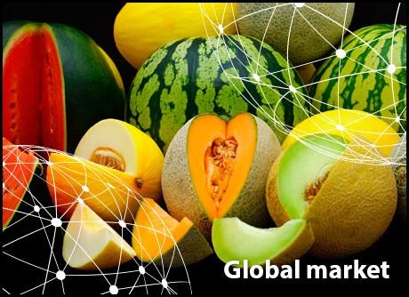 Resumen del mercado global del melón y la sandía