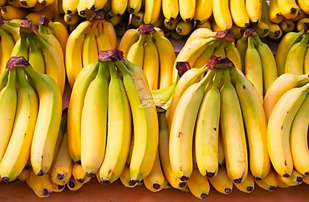 Bananeros temen nueva guerra; Cadena alemana amenaza con bajar el precio