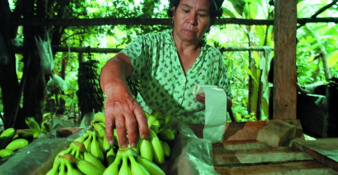 Ecuador se opone a los planes de reducir el precio del banano del minorista alemán Aldi