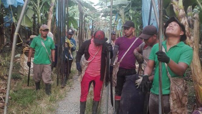 Mitradel, empresa bananera y trabajadores intentan llegar a acuerdo
