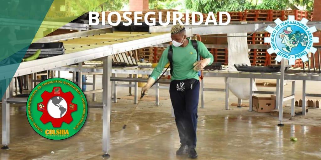 Colsiba y Sitag invitan al sector agroindustrial peruano a tomar medidas de bioseguridad
